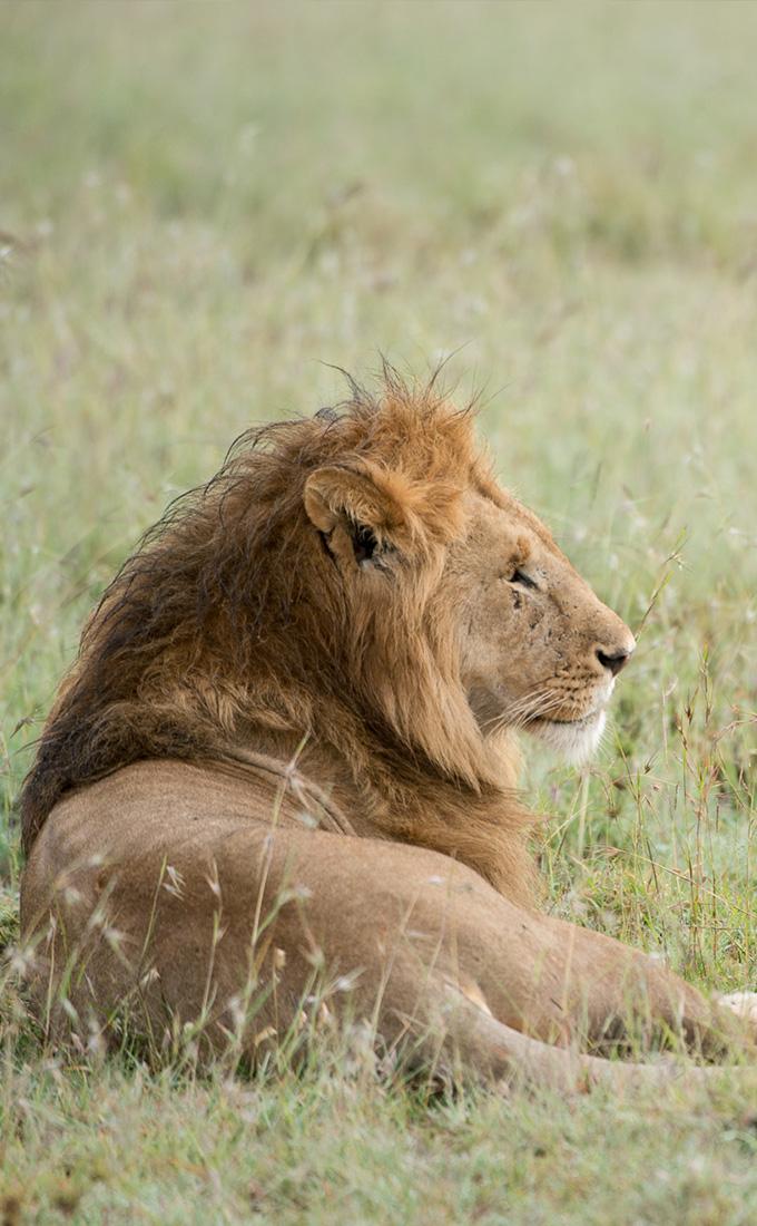 Kruger Park Conservation