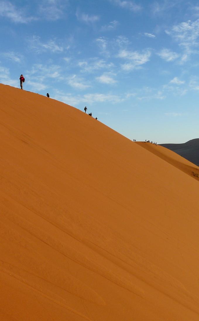 Study Namib Desert Adaptions