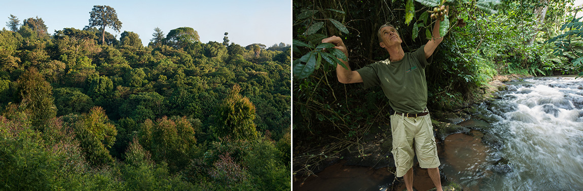 Dr Mark Nicholson in the Restored Forest